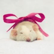 Крыса с бантом