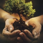 Деревце в руках