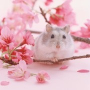 Хомяк в розовых цветках